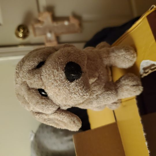 plush toys Collection Image